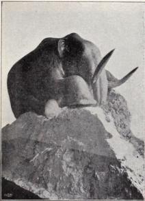 Mammutdjur.