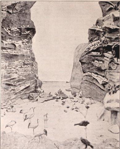 Interiörer från Biologiska Muséet å Utställningen. IV. Strandparti från nordkusten med vadare och sjöfogel.<bEfter fotografier från B. Orling, Stockholm (se sid. 114).
