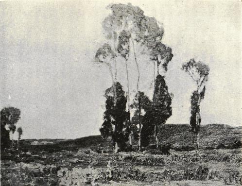 <smal»Eucalyptusträd i aftonskymning.» Enligt en tavla av artisten C. O. Borg, tillhörig förf.</smal