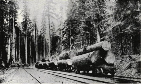 <smalTimmerstockarna forslas på järnväg ner till sågen.</smal