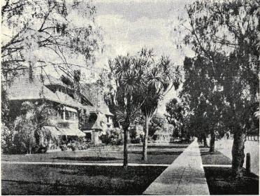 Typisk »Resedential Street» från Los Angeles med pepparträd, palmer och<bgräsmattor.