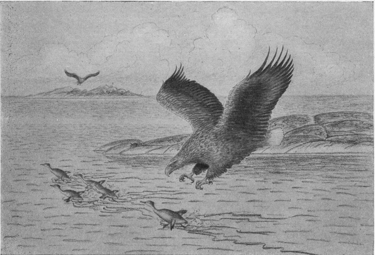 ytterst på fågelvingar