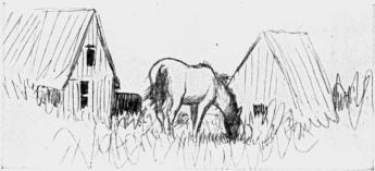 Öns enda häst betar vid Tärnudden.