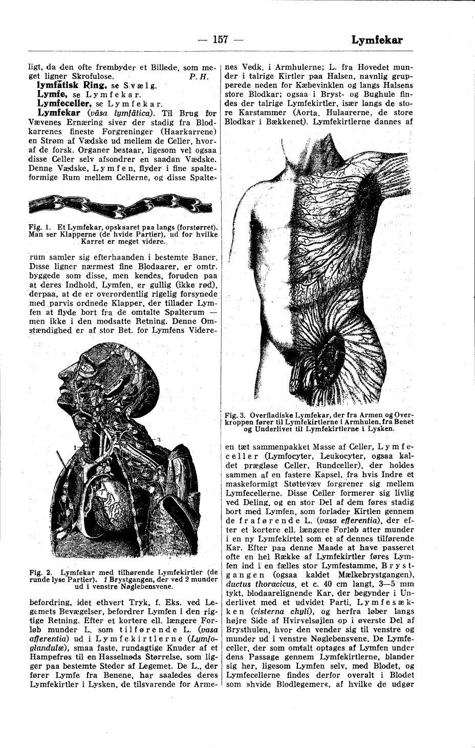 lymfekirtler under armen