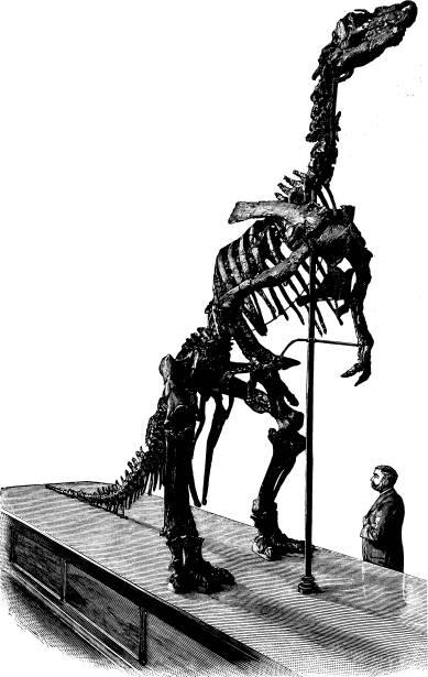 <bFig. 59. Skelett af en skräcködla (Iguanodon)<bur Belgiens kritformation (efter Klaatsch).<b
