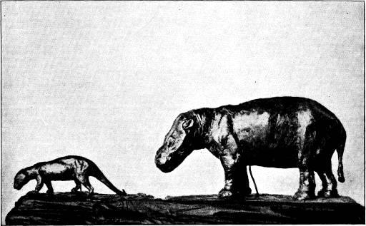 <bFig. 81. Pantolambda och Coryphodon — jämför fig. 80 — <brekonstruerade (efter Osborn).<b