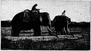 Elefanter forslande timmerstockar.