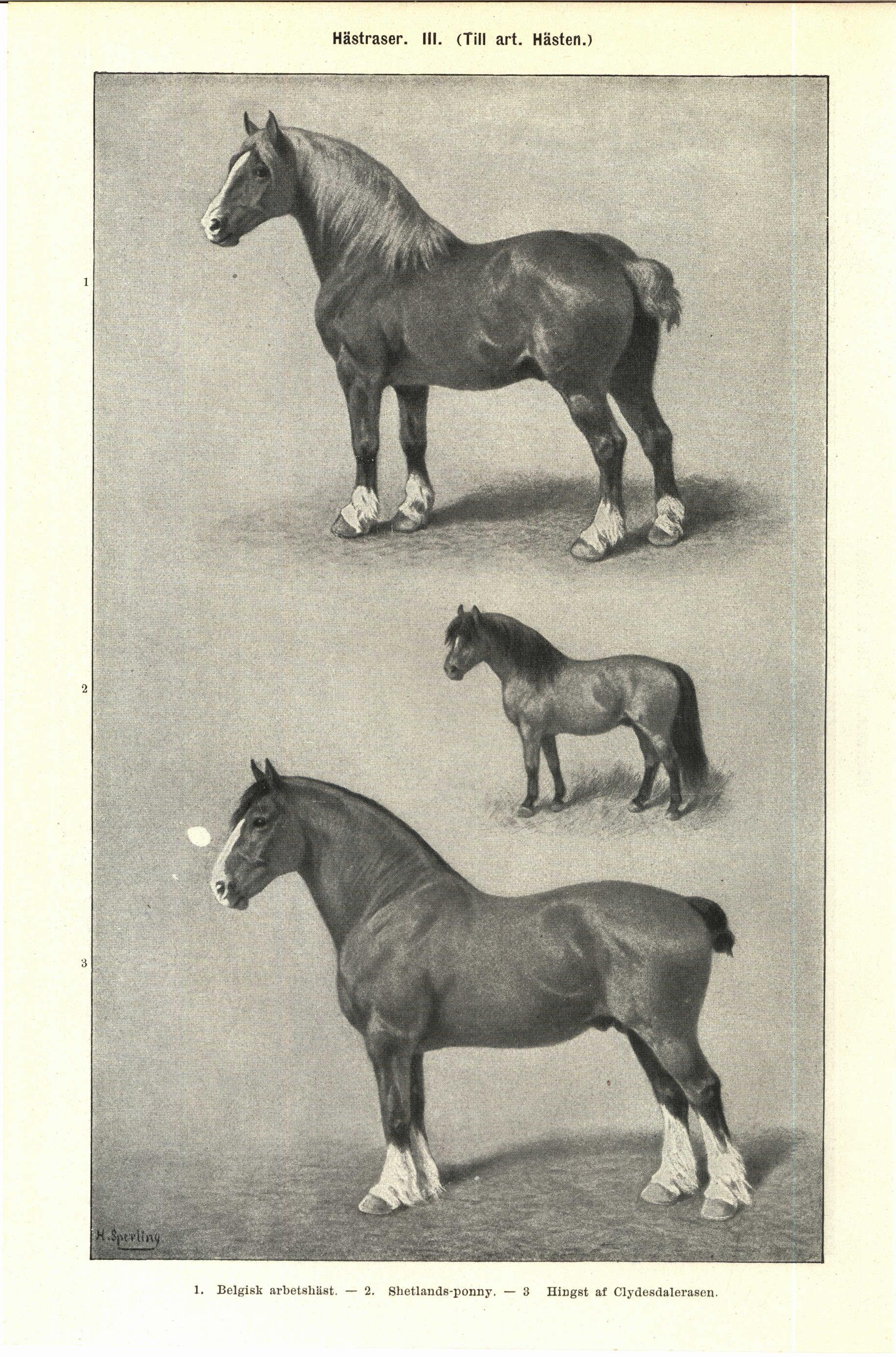 vanliga hästraser sverige