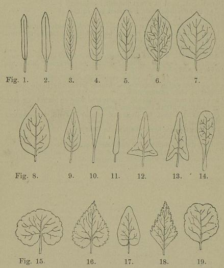 Fig. 1-19