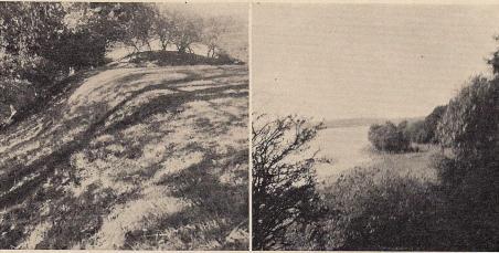 Fig. 1. Borren vid Börringesjön. T. v. den mot sjön stupande branta vallen, t. h.<butsikt från Borren över sjön mot Lindholm. — Foto: Thorsten Andersson 1938.