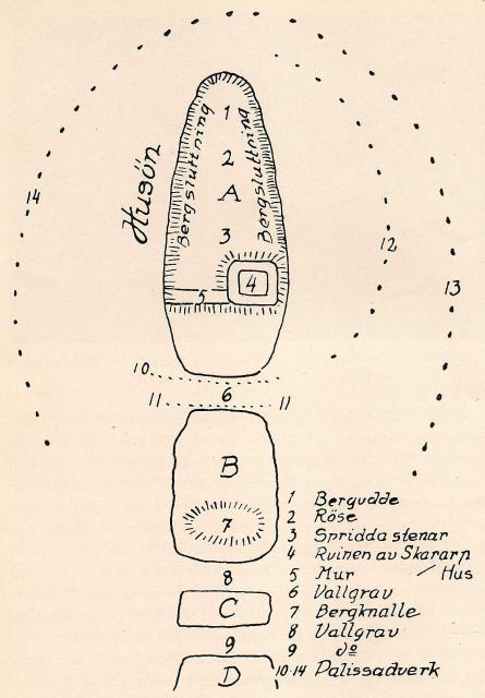 Fig. 9. Skagaholm. Planteckning av O. Lidén.