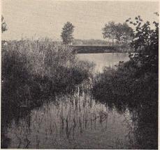 Fig. 19. Den mellersta ännu vattenfyllda,<bvallgraven å Elleholm (jfr fig. 10).<bFoto: Nils Olsson 1938.