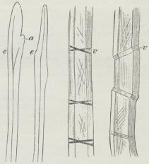 Fig. 6. Bastceller af Hamp.