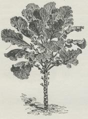 Fig. 3. Bladkaal.