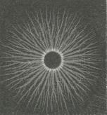 Fig. 4. Positiv fotografisk L. F.