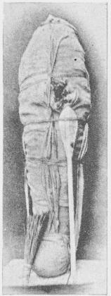 Thotmes III's i Der-el-Bahri fundne,<bikke godt bevarede Mumie. Maspero.