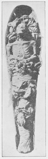 Mumie af Kong Amenothes<b(Amenhotep II), fundet af Loret i Kongens<baf ham opdagede Grav. Theben.