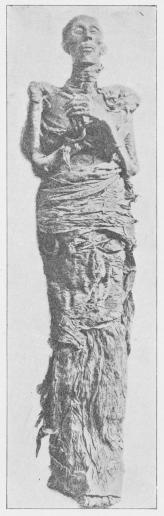 Mumien af Ramses II, fundet i<bDer-el-Bahri, efter Mumiens<bUndersøgelse i Museet i Kairo.
