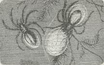 Vandedderkop (Argyroneta aquatica) med Rede.