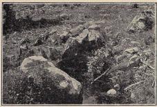Fig. 2. Sigfridskällan i Urshult.