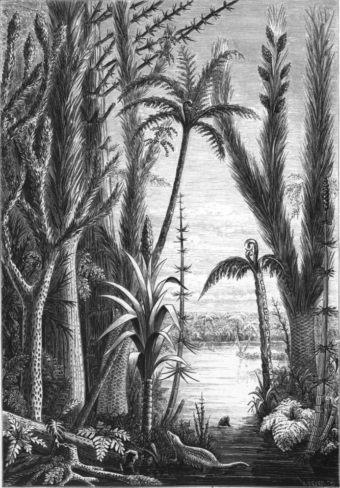 <smalIll. W. MEYER. s.c.</smal<bSigillaria-arter. Calamitcs. Megaphyton(trädartad ormbunke). Lepidophloios.<b<bLepidodendron. Trädartad ormbunke. Cordaites. <b<bKullfallen Sigillaria-stam. Reptilier. Calamites.<b<bStigmaria.<b<bLandskapsbild från Stenkolstiden, hufvudsakligen efter växtrestaurationer<baf Dawson, sammanstäld af P. T. Cleve.